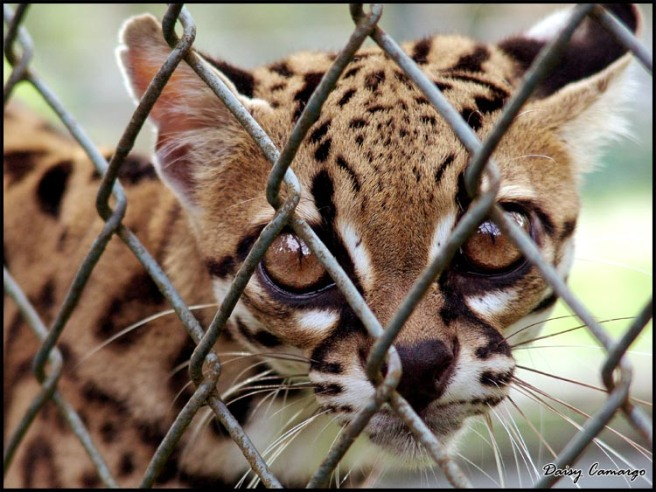 neaspet.blogspot.com (Núcleo de Estudos em Animais Silvestres e Pet's)